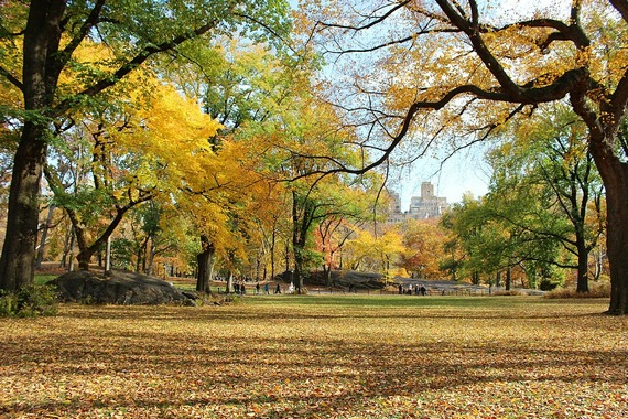 Trees in the Fall at Central Park, NY